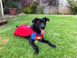 Z8 super dog